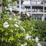 TOURON Les Orchidees 90