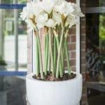 TOURON Les Orchidees complement 029
